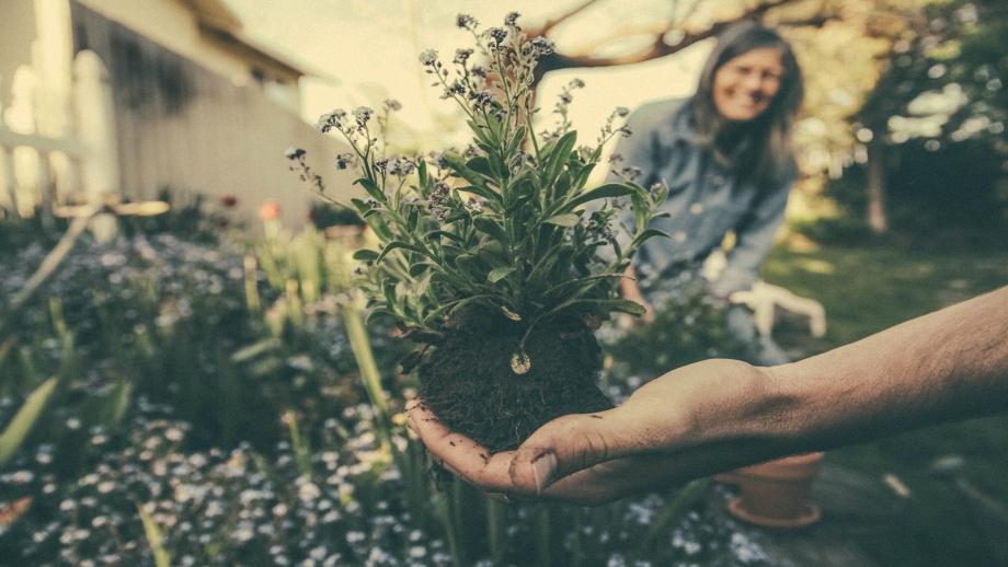 Jak urządzić ogródek działkowy?