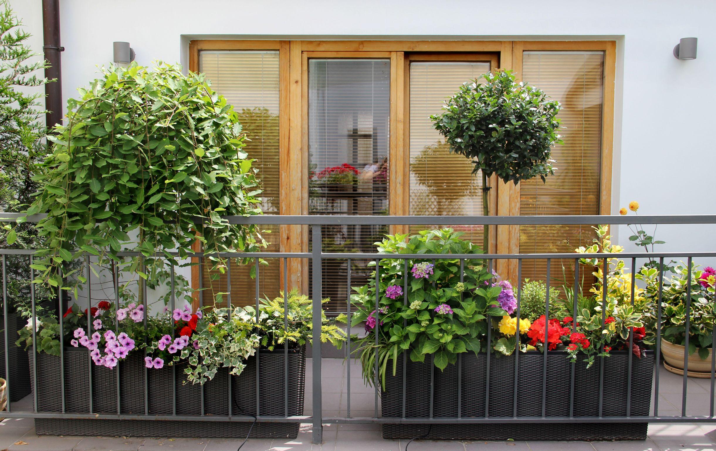 Kwiaty doniczkowe na taras - na co zwrócić uwagę przy ich wyborze?