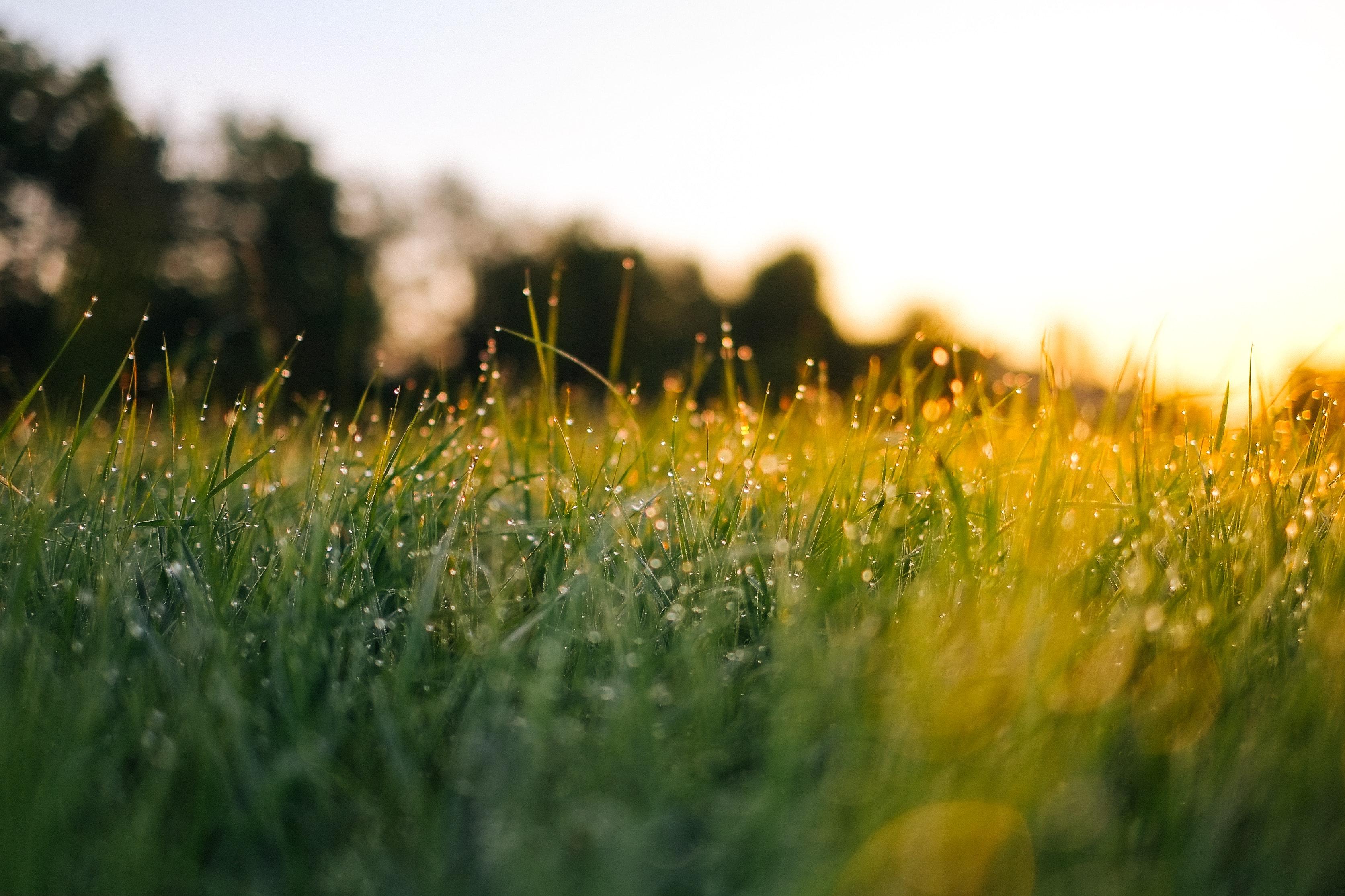 Jak dbać o trawnik po zimie?