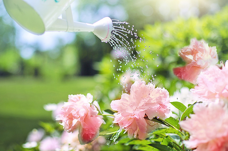 ogrodowe inspiracje kwiaty w ogrodzie