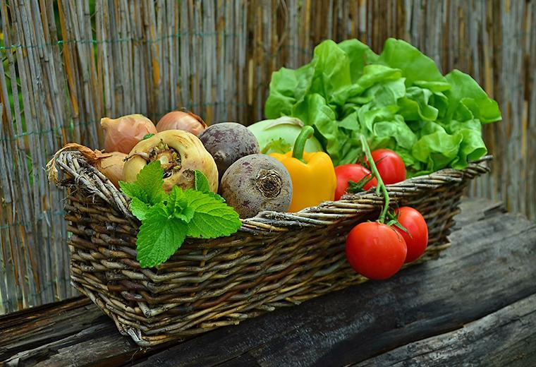 Warzywa z własnych upraw ekologicznych w tunelu foliowym